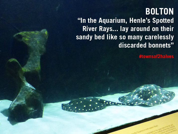 Bolton, Bolton Aquarium, Henle's Spotted River Ray